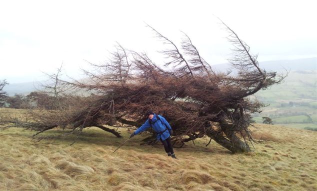 The Great Mell Fell Windy Tree