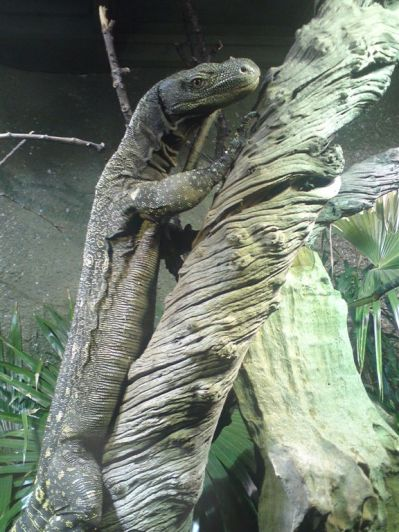 Chester Zoo Dec 09 006