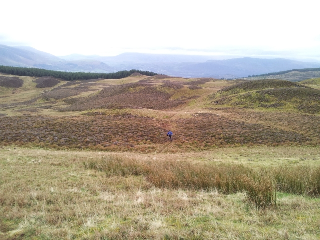 From Whinlatter Top east to more trees