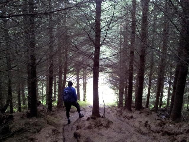 Heading through more trees
