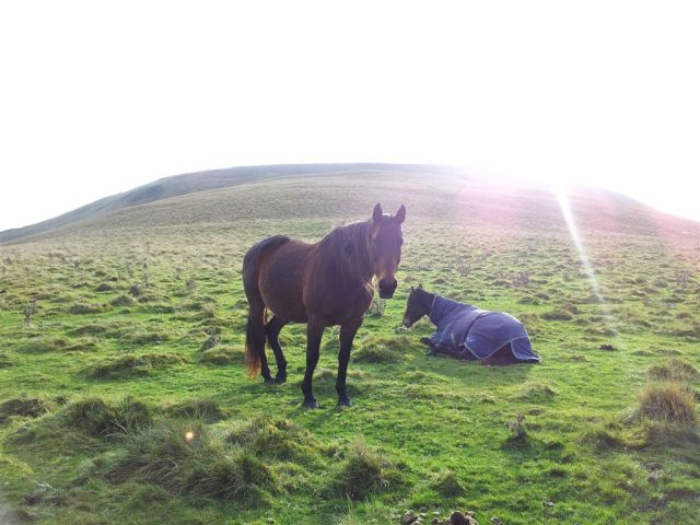 Horses with Shillhope behind now clearing