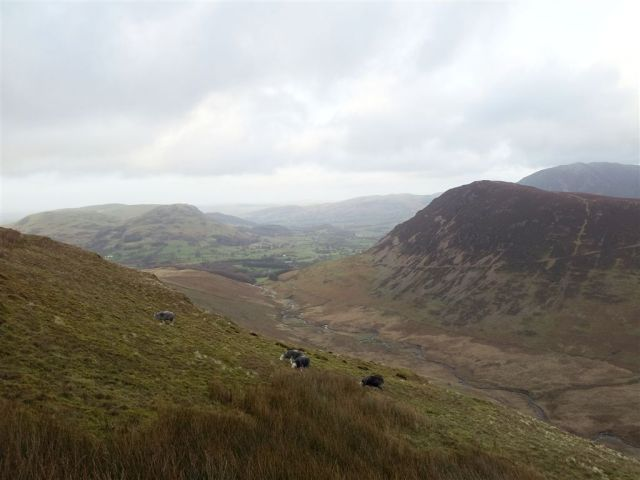 A higher view north with guest Herdwicks that I hellicoptered in for the shot