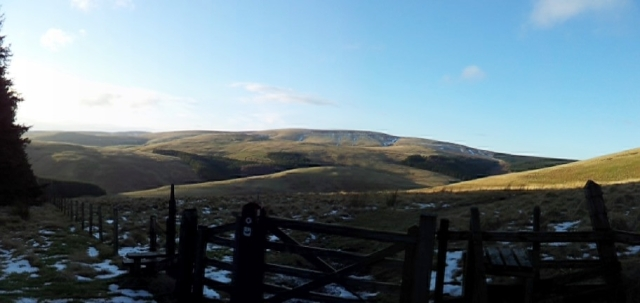 About to enter the forest, nice view of Windy Gyle