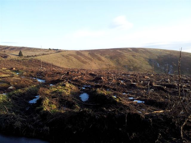 More views south from the forested Clennel St section