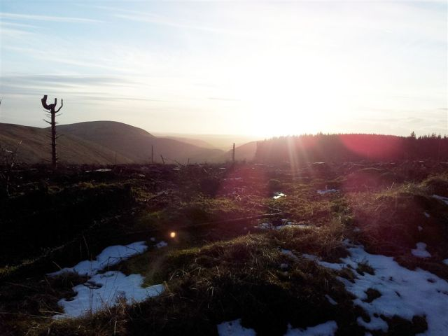 Out of the forest looking south to Shillhope Law