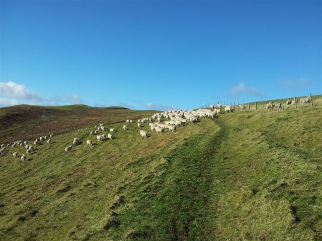 The way ahead baaarred (bad sheep ago)