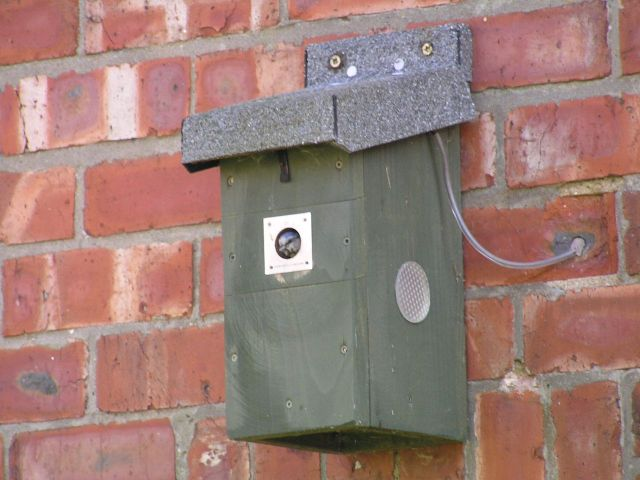 The nestbox with parent - took ages to get this pic