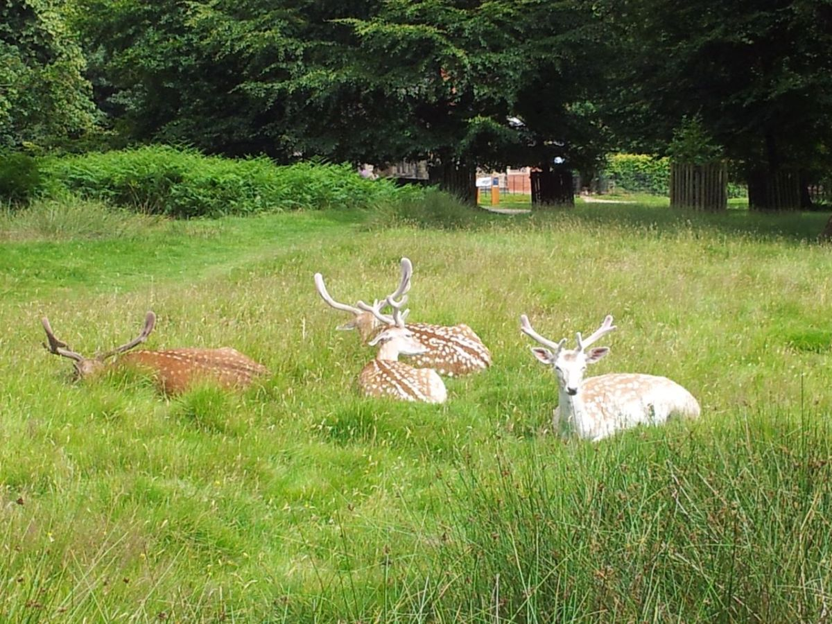 Training for the Highlands - Wandering Around Cheshire's Dunham Massey Deer Park