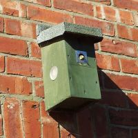 A Blog From The Blue Tit Box 2015 - Basic Instinct