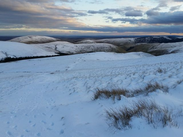 Wintry Windy Gyle walk March 2016_15