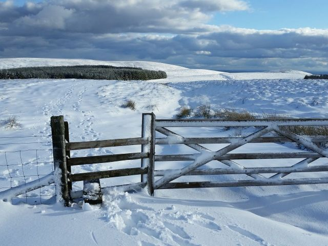 Wintry Windy Gyle walk March 2016_5