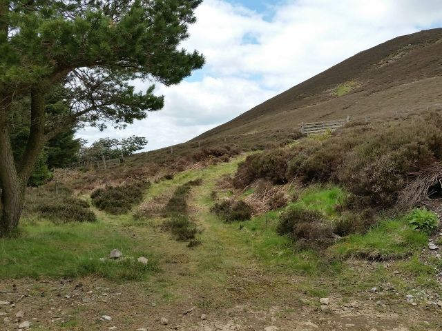 The Cheviot via the Hen Hole from Langleeford_7